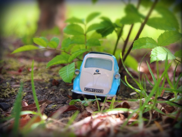 Intrepid explorer: BMW Isetta tackles the rugged terrain of the front yard. Photo: Su Leslie, 2015