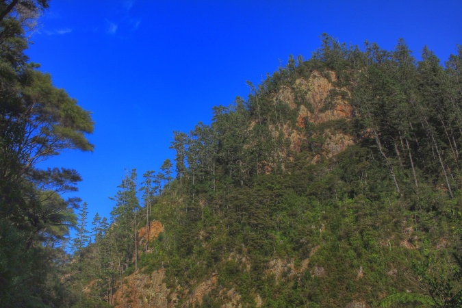 Pine trees on rocky hillside. Karangahake Gorge, North Island, NZ. Image: Su Leslie, 2016