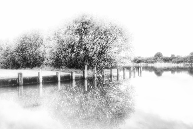Black and white shot of trees reflected in lake at Tokaanu Boat Ramp, Turangi. Image: Su Leslie, 2016