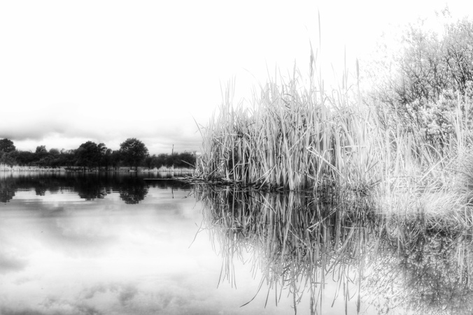 Black and white image of rushes reflected in Lake Taupo at Tokaanu. Image: Su Leslie, 2016