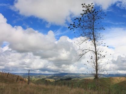 Rural NZ. Image: Su Leslie, 2017