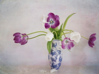 Enjoying the last of the tulips in my $3 St John's shop vase. Image: Su Leslie 2018