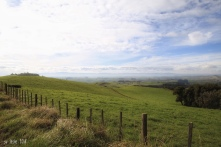 ... and on the other side of the road. Green fields and blue sky. Matamata, NZ. Image: Su Leslie 2108