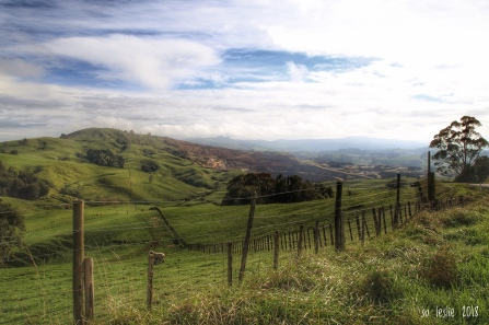 Green hills and brown. Farmland adjacent to the Hinuera Quarry, Matamata, NZ. Image: Su Leslie 2018