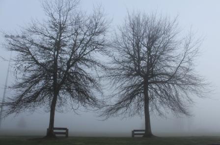 Morning mist, Greenhithe, New Zealand. Image: Su Leslie